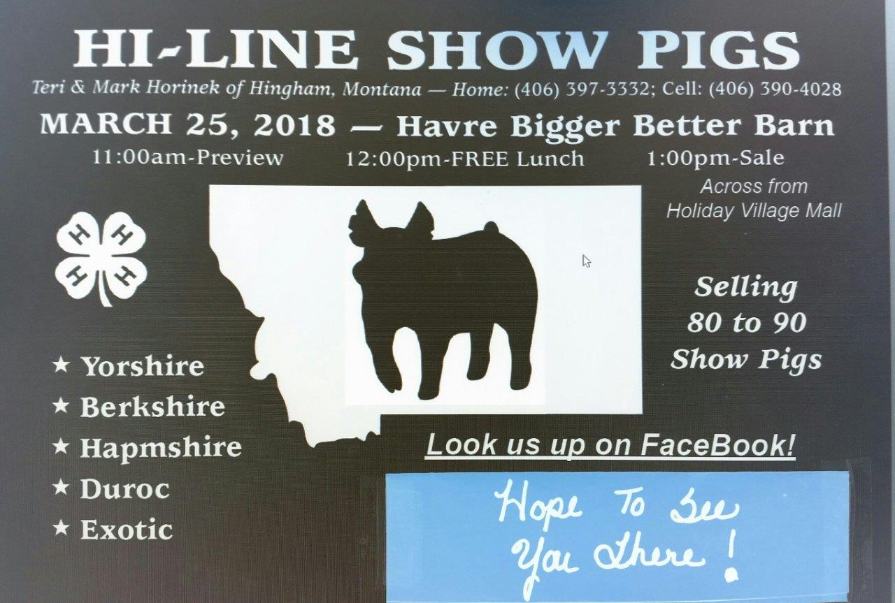 Show Pigs 1